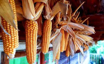 Őszi szünet programok - Szentendre Skanzen - Kukoricázz velünk